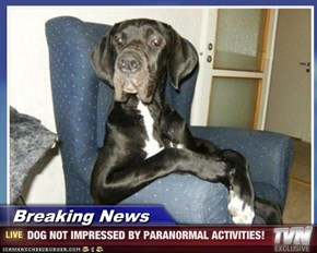 Breaking News - DOG NOT IMPRESSED BY PARANORMAL ACTIVITIES!