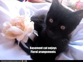 Basement cat enjoys Floral arangements