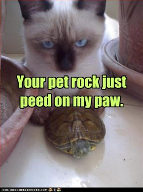Your pet rock just peed on my paw.
