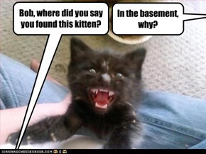 Bob, where did you say you found this kitten?