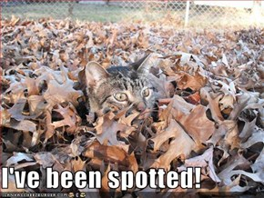 I've been spotted!