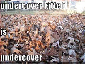 undercover kitteh is undercover