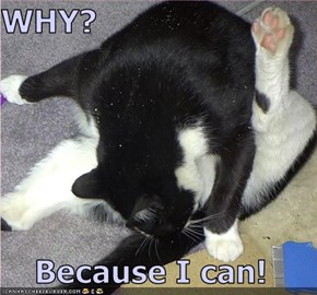 WHY?  Because I can!