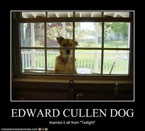 EDWARD CULLEN DOG