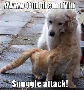 AAww Cuddlemuffin  Snuggle attack!