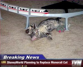 Breaking News - DisneyWorld Planning to Replace Monorail Cat