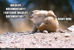 WILDLIFE DOCUMENTARY?  I GOTCHUR WILDLIFE DOCUMENTARY...