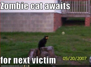 Zombie cat awaits   for next victim