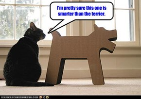 I'm pretty sure this one is smarter than the terrier.