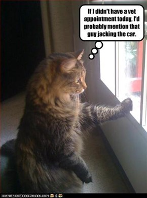 If I didn't have a vet appointment today, I'd probably mention that guy jacking the car.