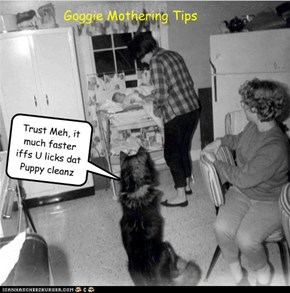 Goggie Mothering Tips