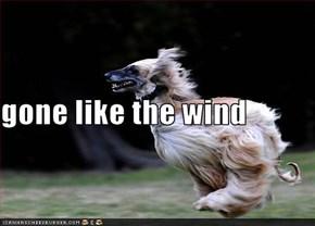 gone like the wind