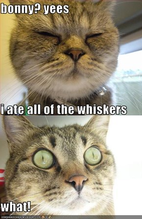 bonny? yees i ate all of the whiskers  what!