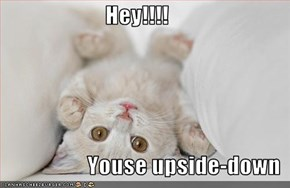Hey!!!!                     Youse upside-down
