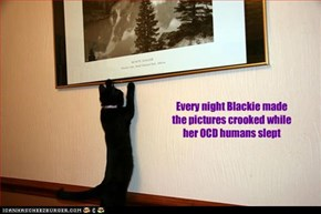 Every night Blackie made the pictures crooked while her OCD humans slept