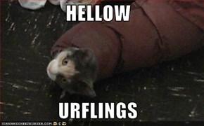 HELLOW  URFLINGS