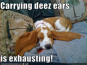 Carrying deez ears  is exhausting!