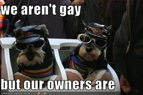 we aren't gay  but our owners are