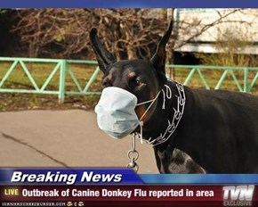 Breaking News - Outbreak of Canine Donkey Flu reported in area