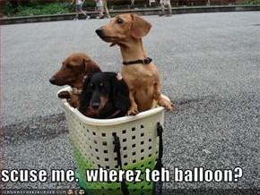 scuse me.  wherez teh balloon?