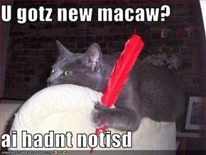 U gotz new macaw?  ai hadnt notisd