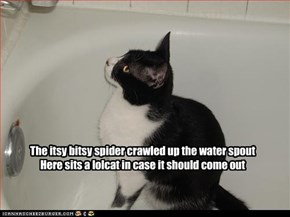 The itsy bitsy spider crawled up the water spout Here sits a lolcat in case it should come out