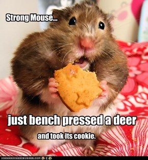 Strong Mouse...