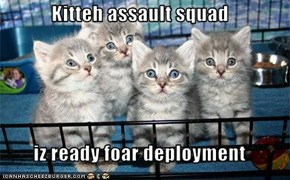Kitteh assault squad  iz ready foar deployment
