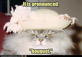 Hyacinth kitteh warns you: