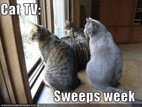Cat TV:    Sweeps week