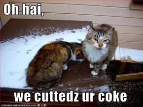 Oh hai,    we cuttedz ur coke