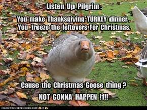 Listen  Up  Pilgrim :