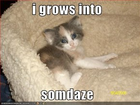 i grows into  somdaze