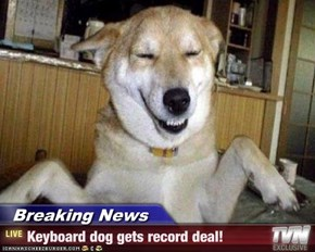 Breaking News - Keyboard dog gets record deal!