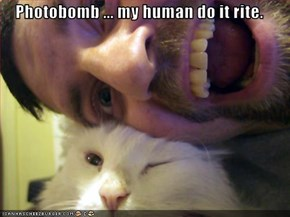 Photobomb ... my human do it rite.