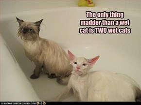 The only thing madder than a wet cat is TWO wet cats