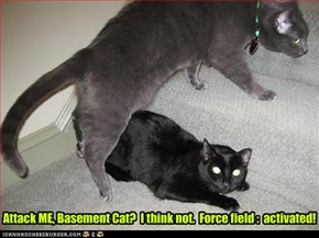 Attack ME, Basement Cat?  I think not.  Force field :  activated!