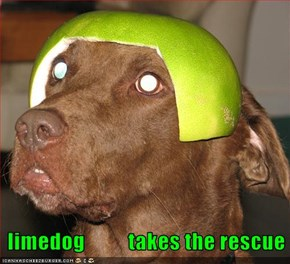 limedog          takes the rescue