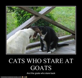 CATS WHO STARE AT GOATS