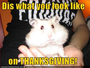 Dis what you look like  on THANKSGIVING!