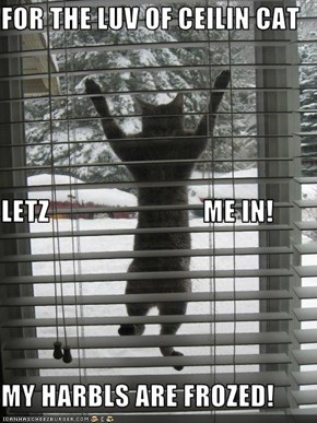 FOR THE LUV OF CEILIN CAT LETZ                            ME IN! MY HARBLS ARE FROZED!