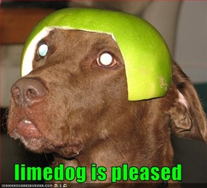 limedog is pleased