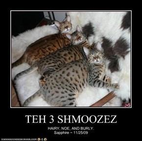 TEH 3 SHMOOZEZ