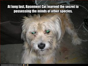 At long last, Basement Cat learned the secret to possessing the minds of other species.