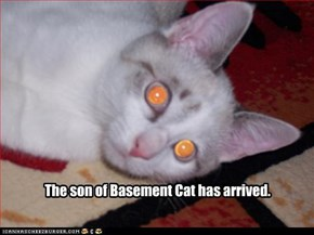 The son of Basement Cat has arrived.