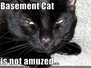 Basement Cat  is not amuzed...