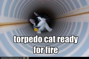 torpedo cat ready for fire