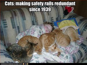Cats: making safety rails redundant since 1939