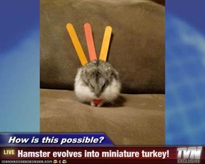 How is this possible? - Hamster evolves into miniature turkey!