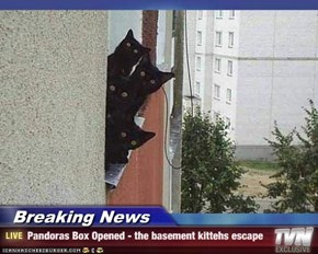 Breaking News - Pandoras Box Opened - the basement kittehs escape
